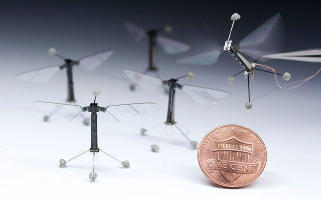 Inspired by the biology of a fly, with submillimeter-scale anatomy and two wafer-thin wings that flap almost invisibly at 120 times per second, the RoboBee takes its first controlled flight. The culmination of a decade's work, RoboBees can perform vertical takeoff, hovering and steering. (Image courtesy of Kevin Ma and Pakpong Chirarattananon.)