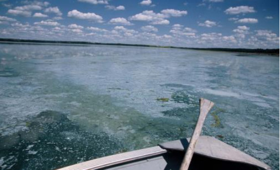 Saddle Lake is the source water for the Saddle Lake Cree Nation utility. The water is so thick with blue-green algae it washes ashore in mats. (Image courtesy of the Safe Drinking Water Foundation.)