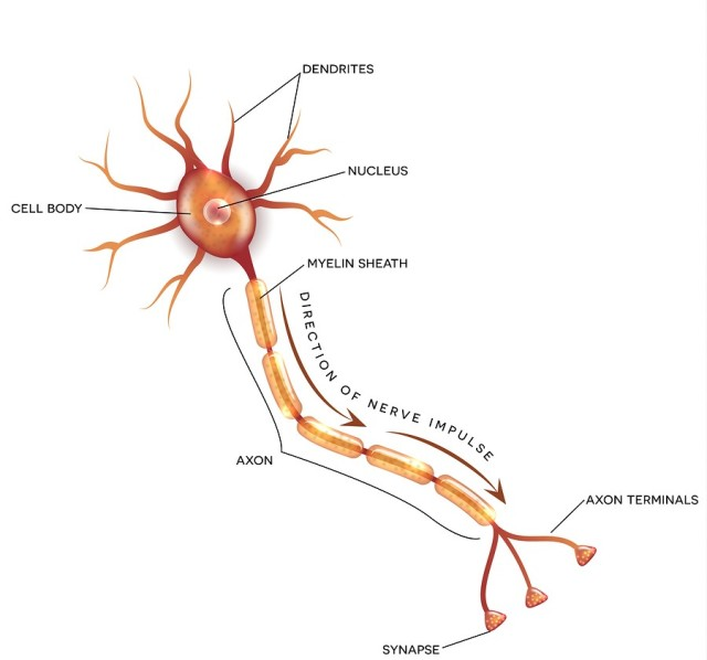 Engineers Have Found a Way to Weld Neurons > ENGINEERING.com