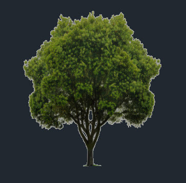 Figure 5. Tree created with a material containing an opacity map.