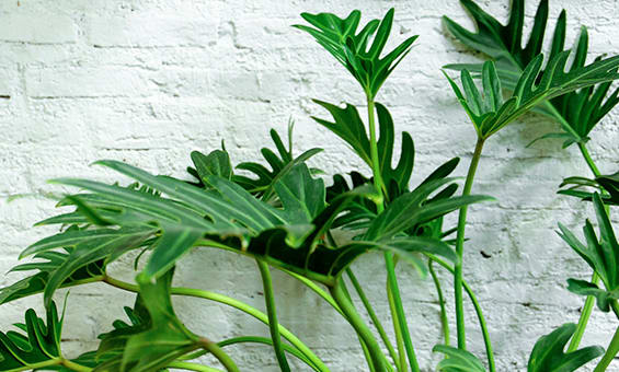 8 Dangerous Aussie Garden Plants To Look Out For This Spring Enjo Australia