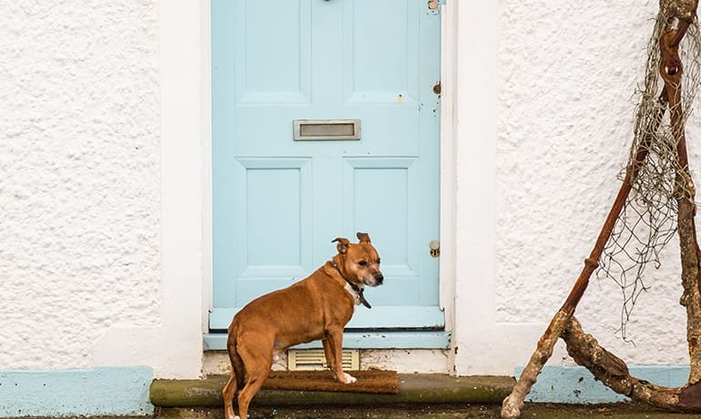 The best way to clean your home if you have a dog - ENJO