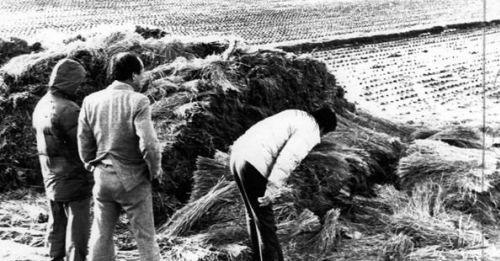 《殺人回憶》殺人魔終被找到,南韓史上最大連續殺人懸案宣告偵破