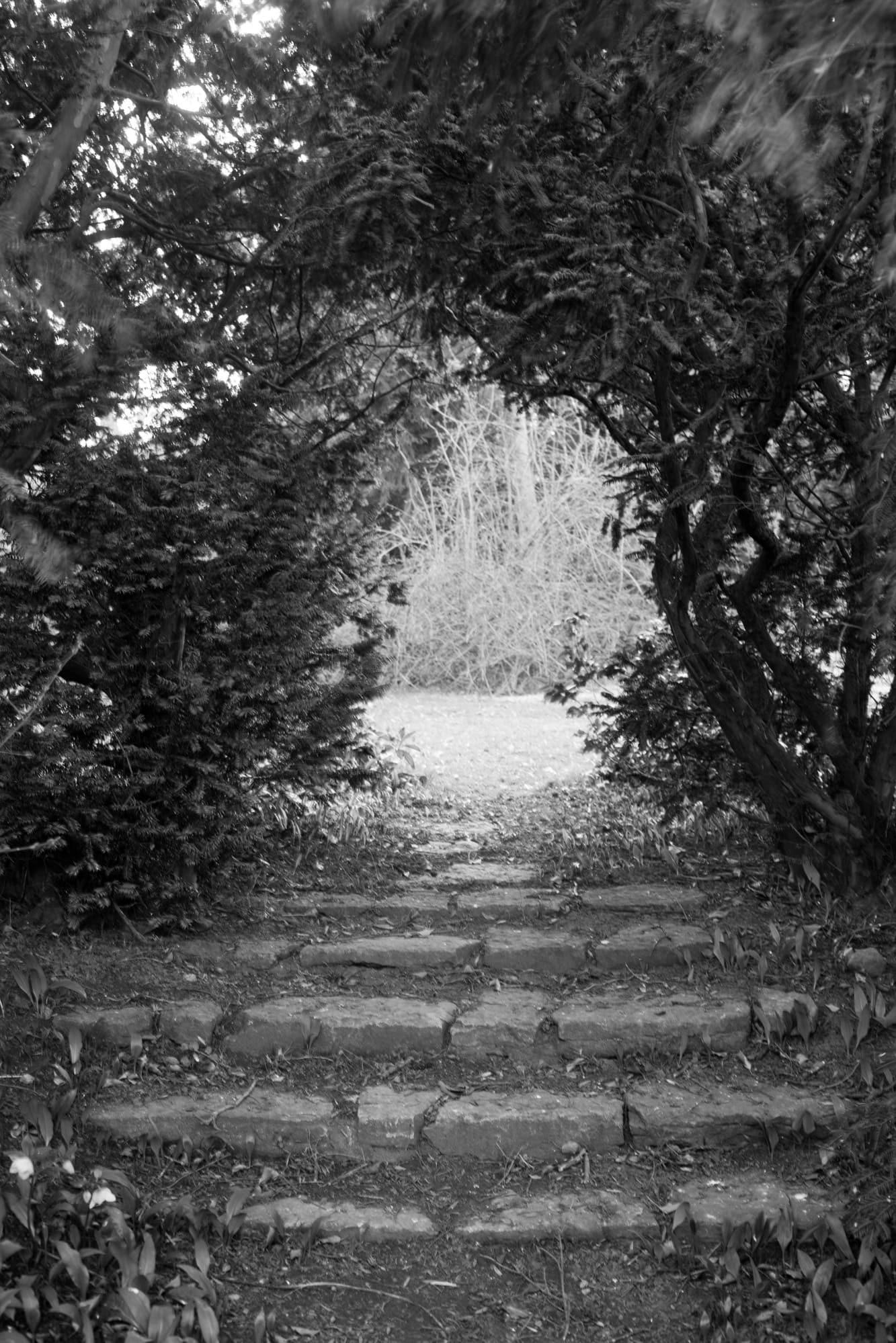 Genom trånga passager och längs vindlande gångar leds man in i Ola Nilssons fantastiska trädgård.