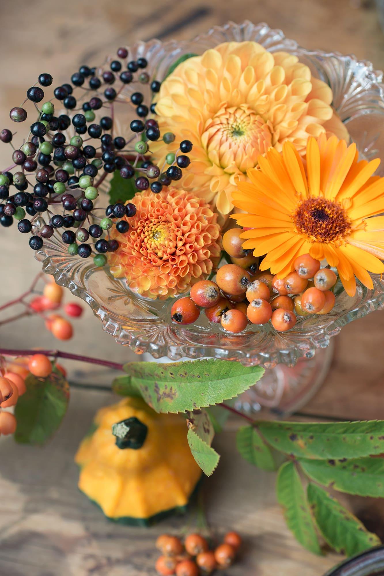 Dahlior tillsammans med en ringblomma, rönnbär och fläderbär i en skål på fot blir en fin färgklick på bordet.