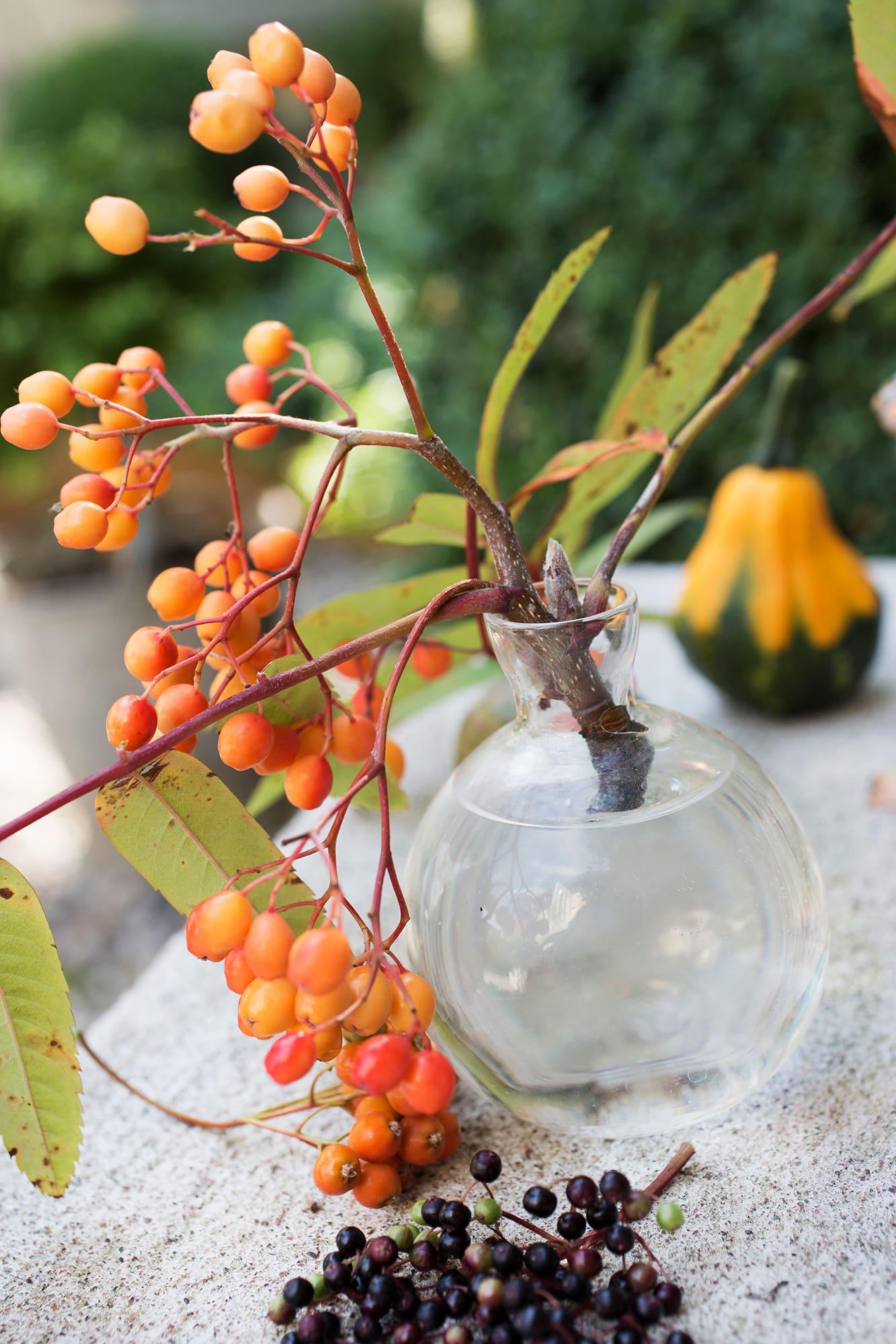 En kvist med rönnbär är vackert i vasen.