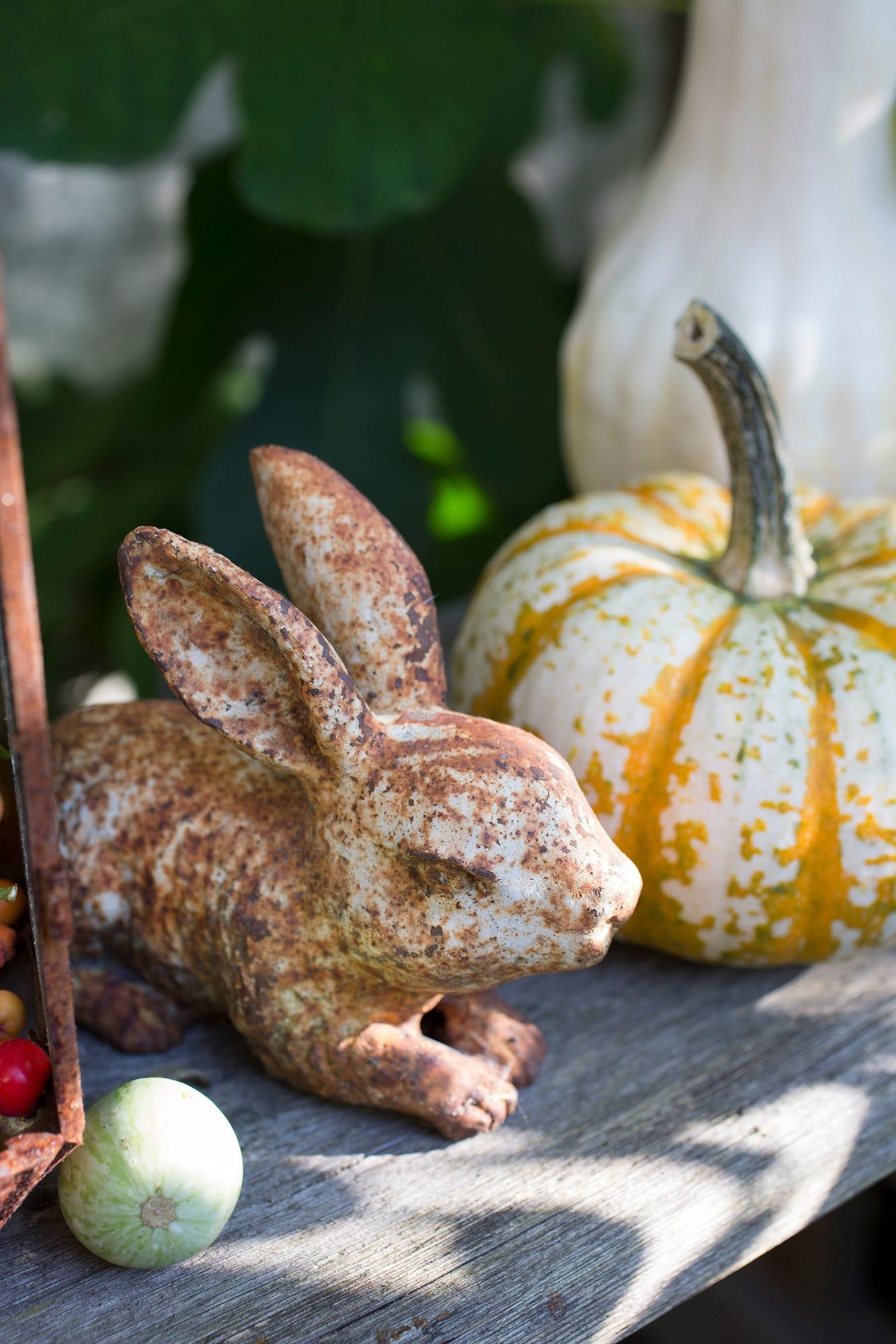 Den lilla kaninen i gjutjärn har fått en vacker patina efter alla år i trädgården och solar sig gärna i sällskap av pumporna.