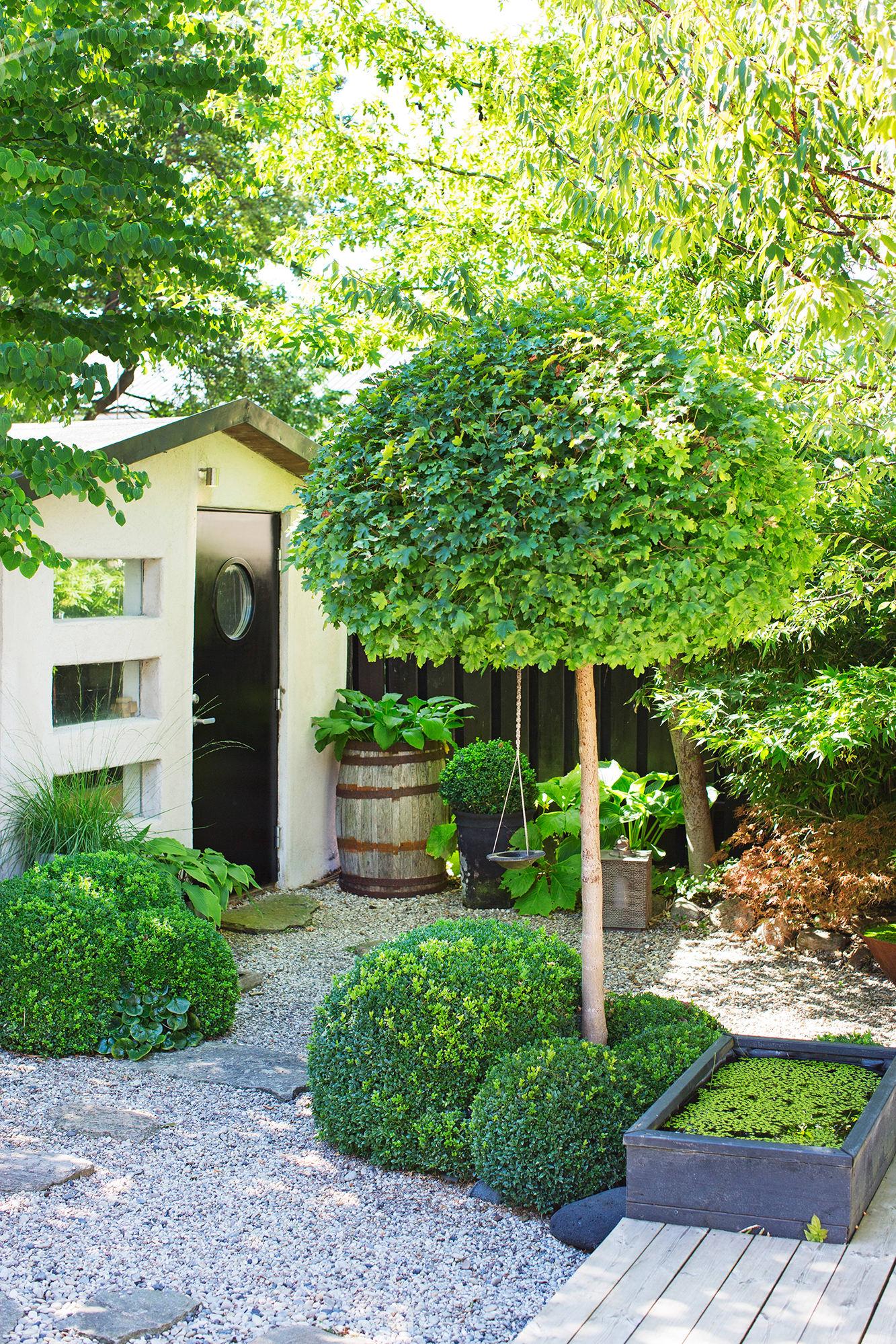 Klotlönnen och buxbomskloten står för de runda formerna i trädgården.