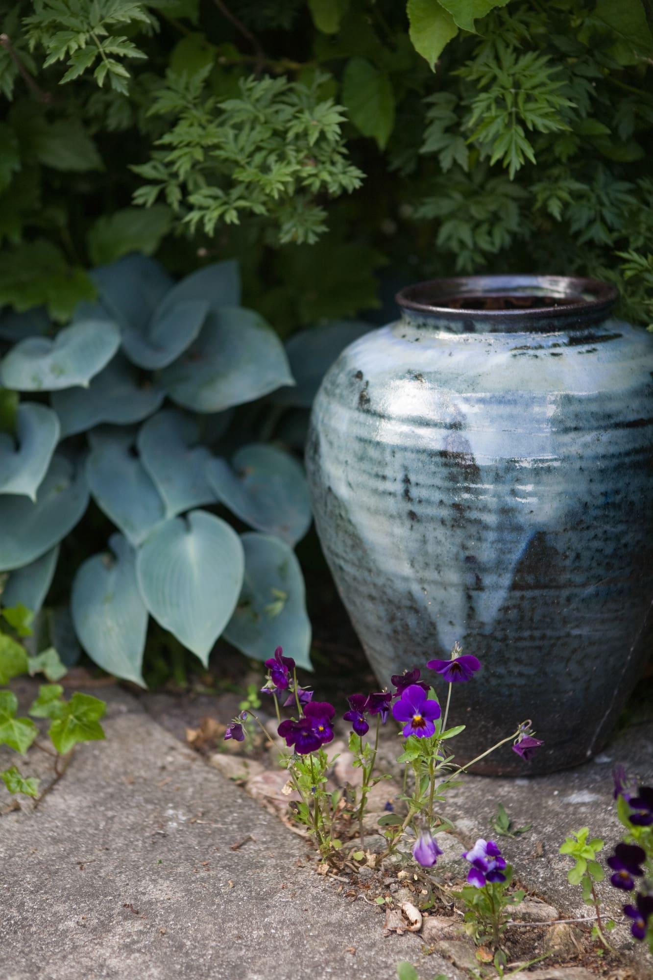 Vacker blå urna som kjeld gjort passar fint ihop med den blågrå hostan och liten blå viol.