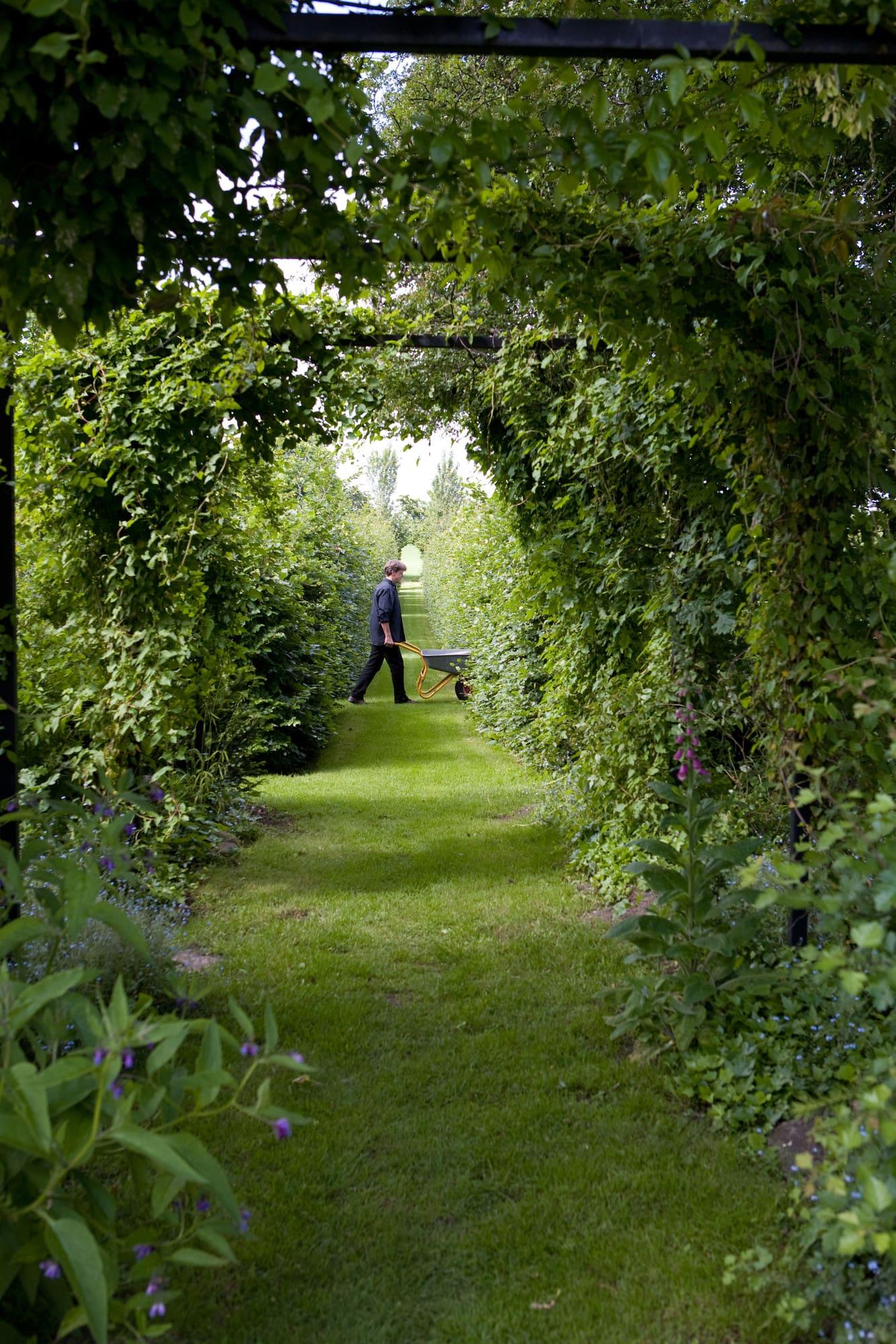 Kjeld med skottkärran i kavaljergången. Den löper genom hela trädgården, på pergolan växter klängrosor bland annat Rosa Arvensis splendens och Felicite parmentier samt bokharabinda.