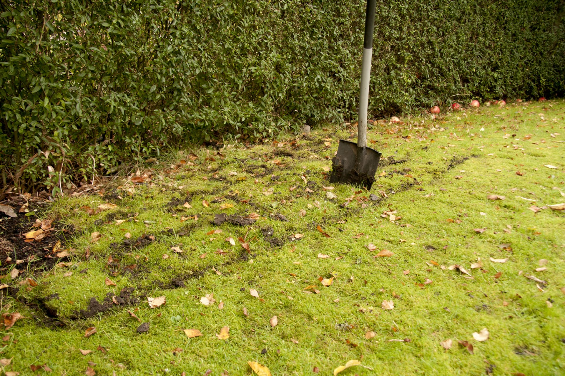Markera platsen för lökängen med en vass spade. Dela sedan in området i rutor.