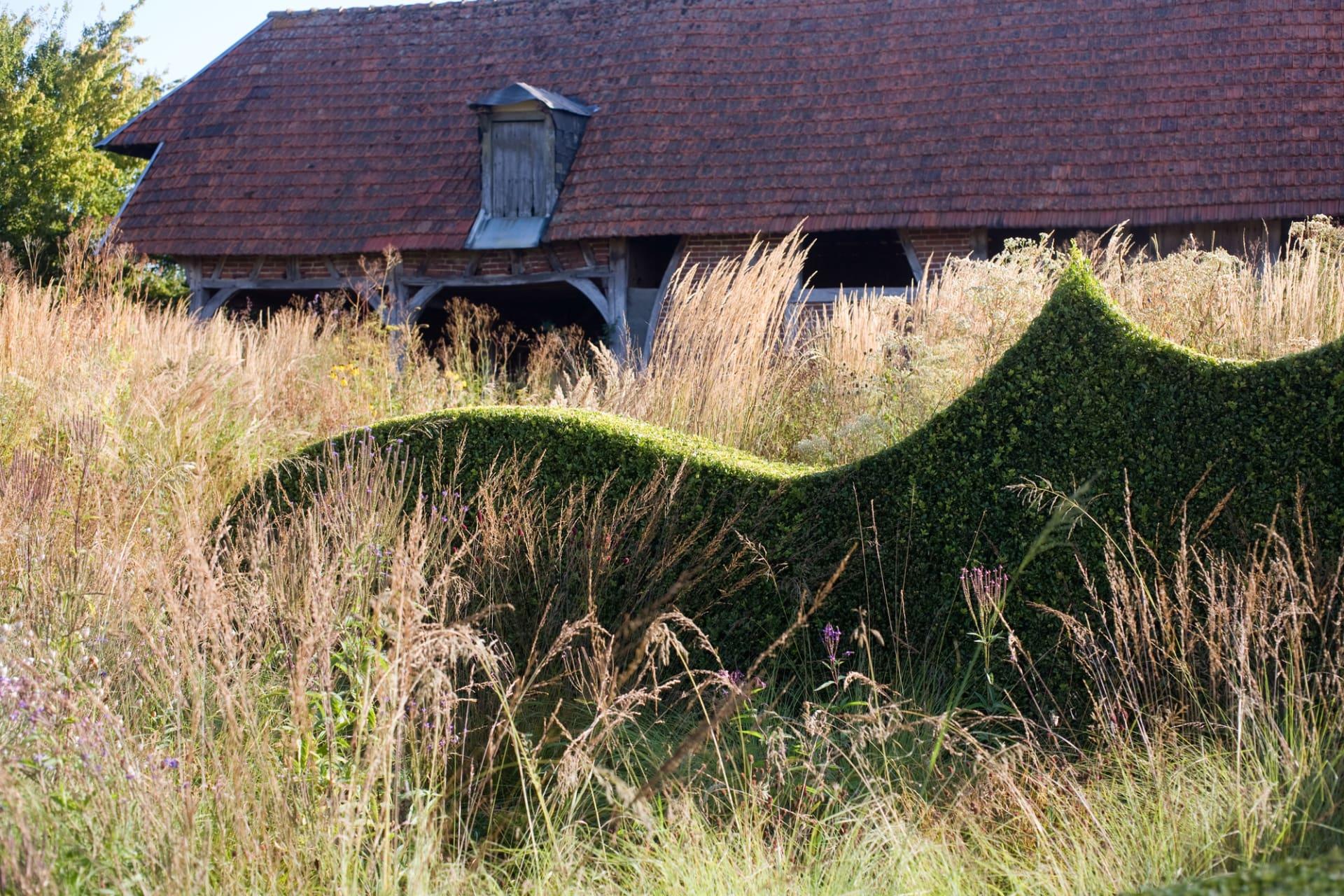 Gräs i ständig rörelse i kontrast till stillastående, stramt klippt buxbom.