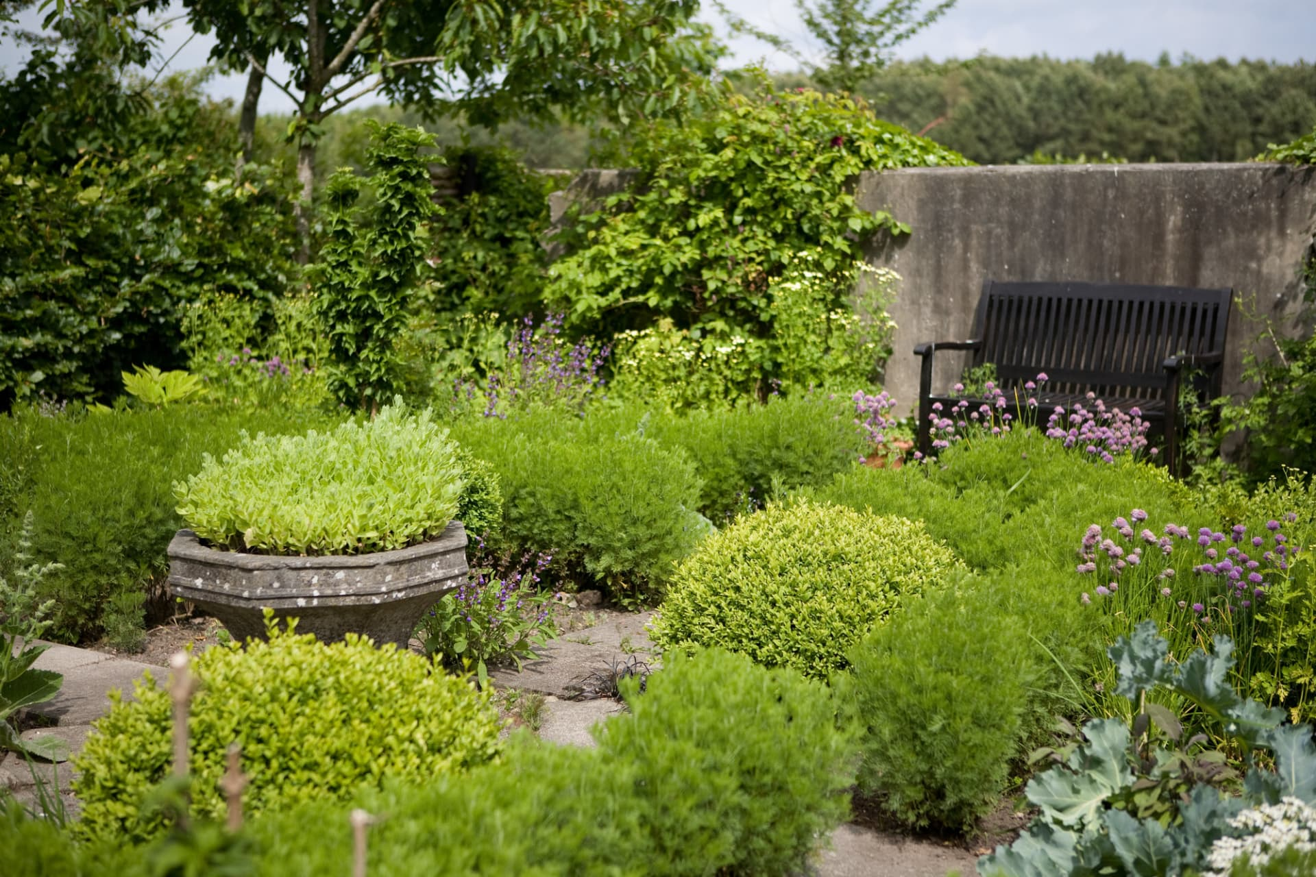 kryddträdgården, klippt buxbom, och klippt Ambra, artemisia abrotanum. En slags malört med smala starkt doftande blad. Kärleksört i den grå stenkrukan.