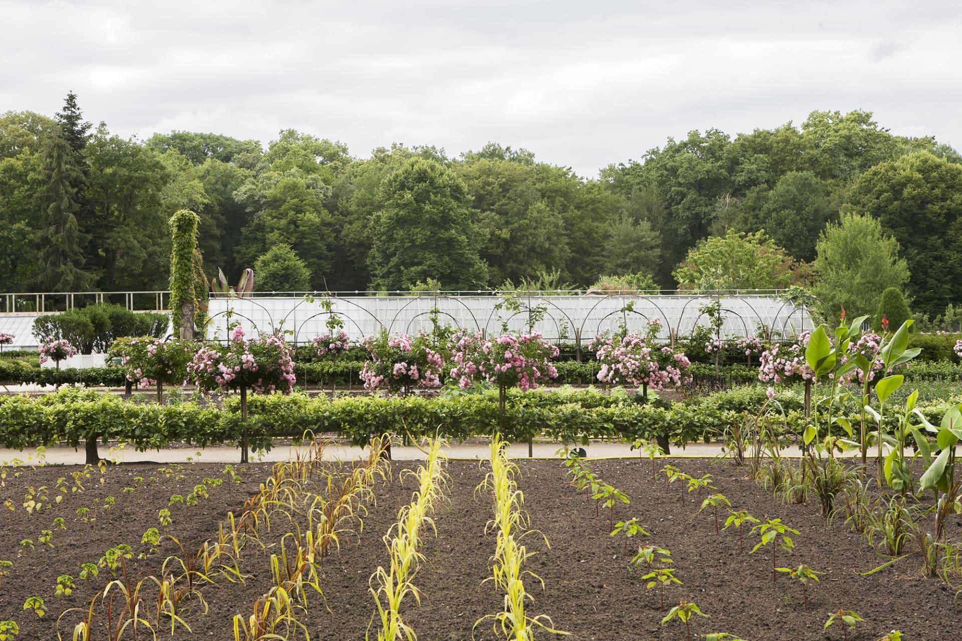 Köksträdgården är en välskött oas som gör att de börjar klia i odlingsfingrarna.