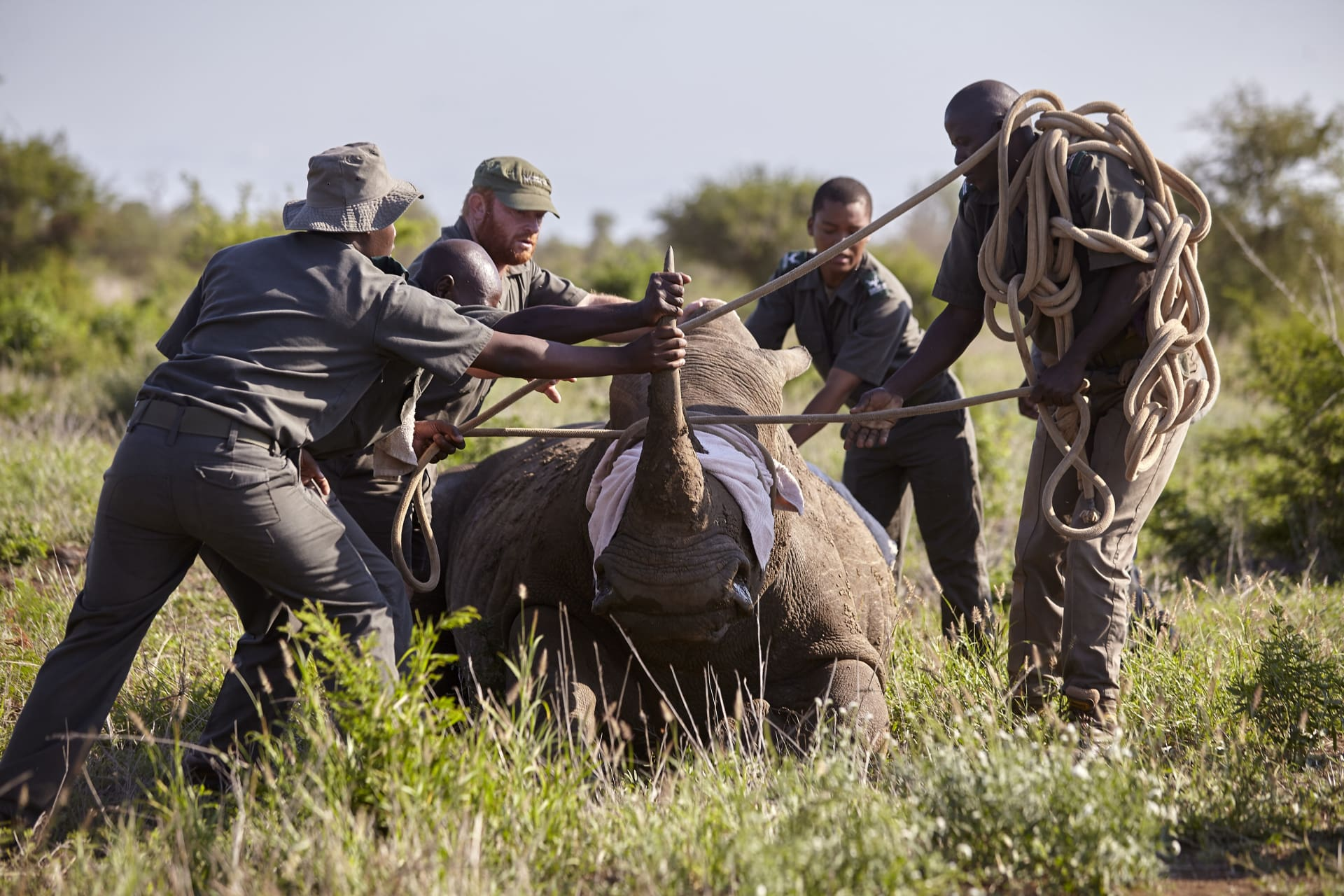 Many hands are involved in ensuring the health and well being of both the humans and the animals of the Kruger Park.
