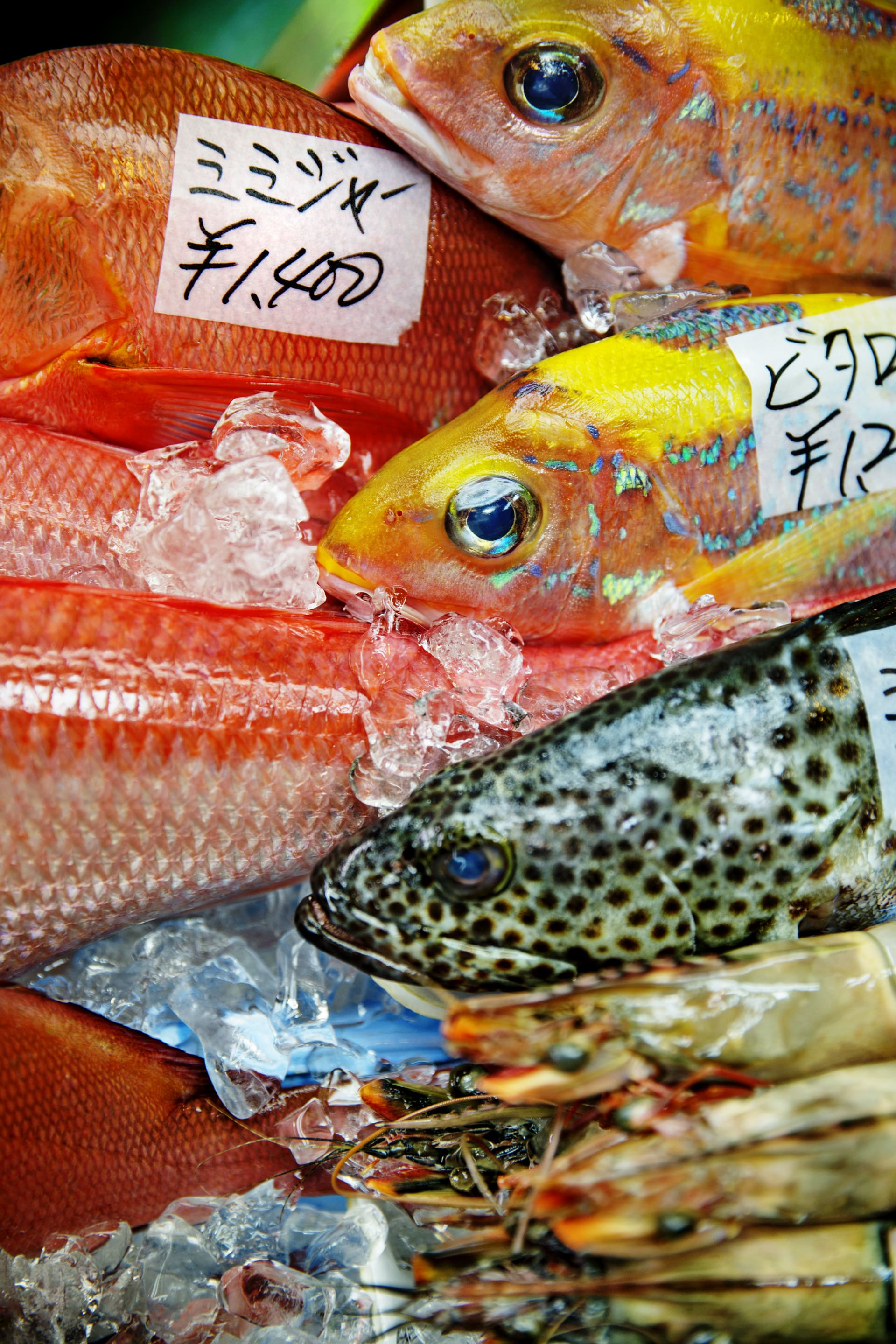 Fishes for sale on a local fish market in Naha.