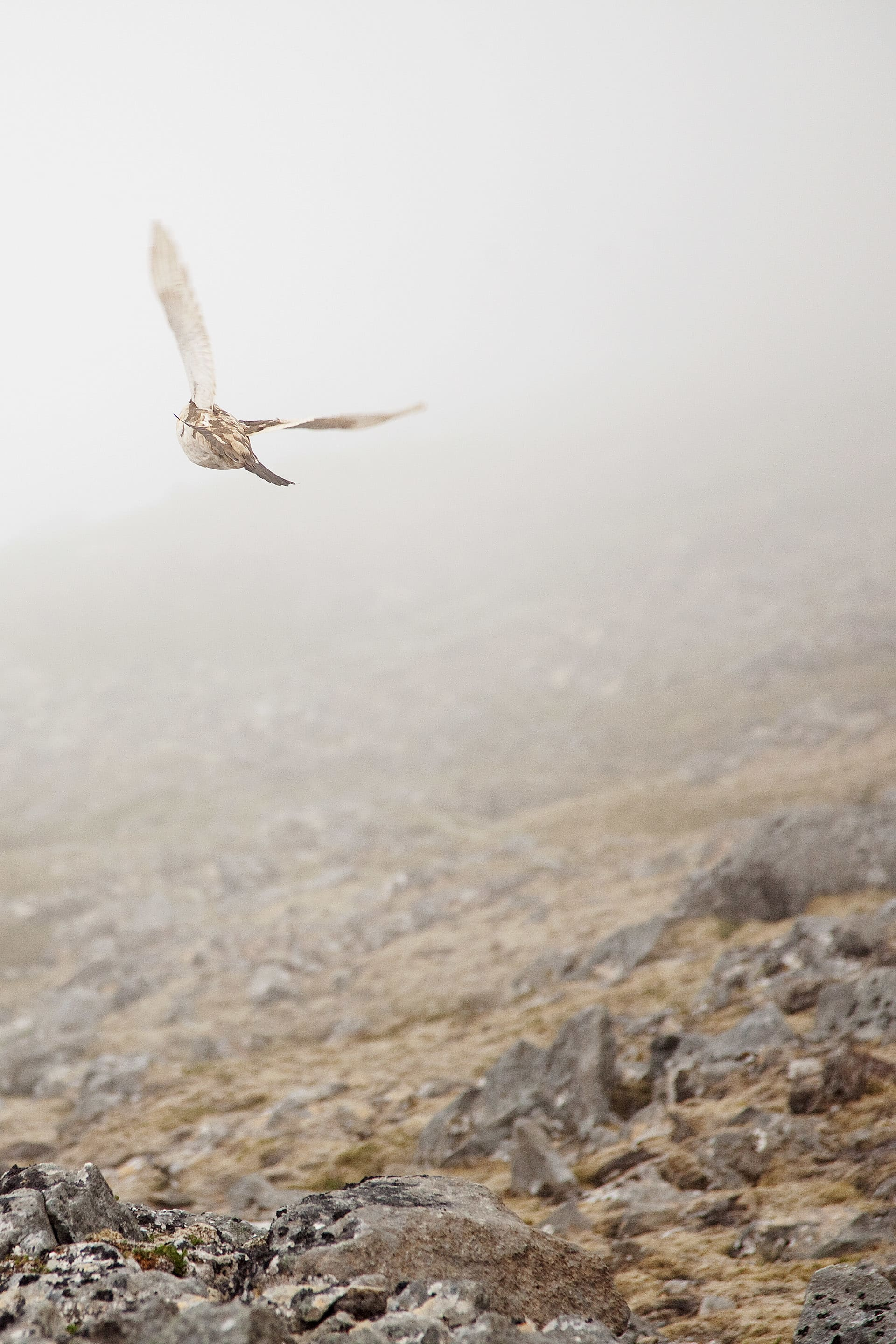 Mist and birds was a common sight on the hike.