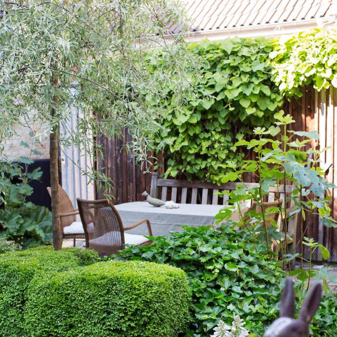 Kring matplatsen samlas pipranka, murgröna och gårdens silverpäron som en berså.