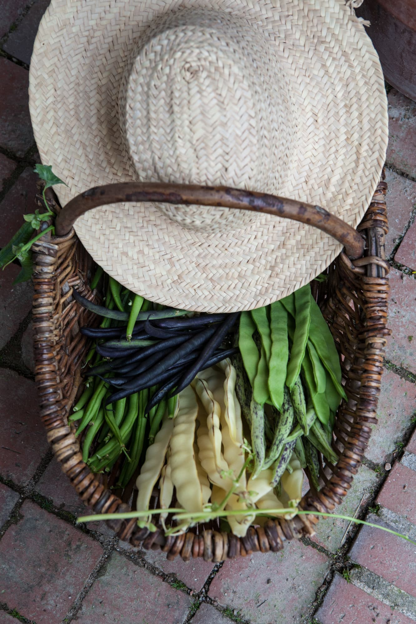 Freshly harvested wax beans, as well as purple, green and snap beans.The bright one in the foreground is called Golden gate.
