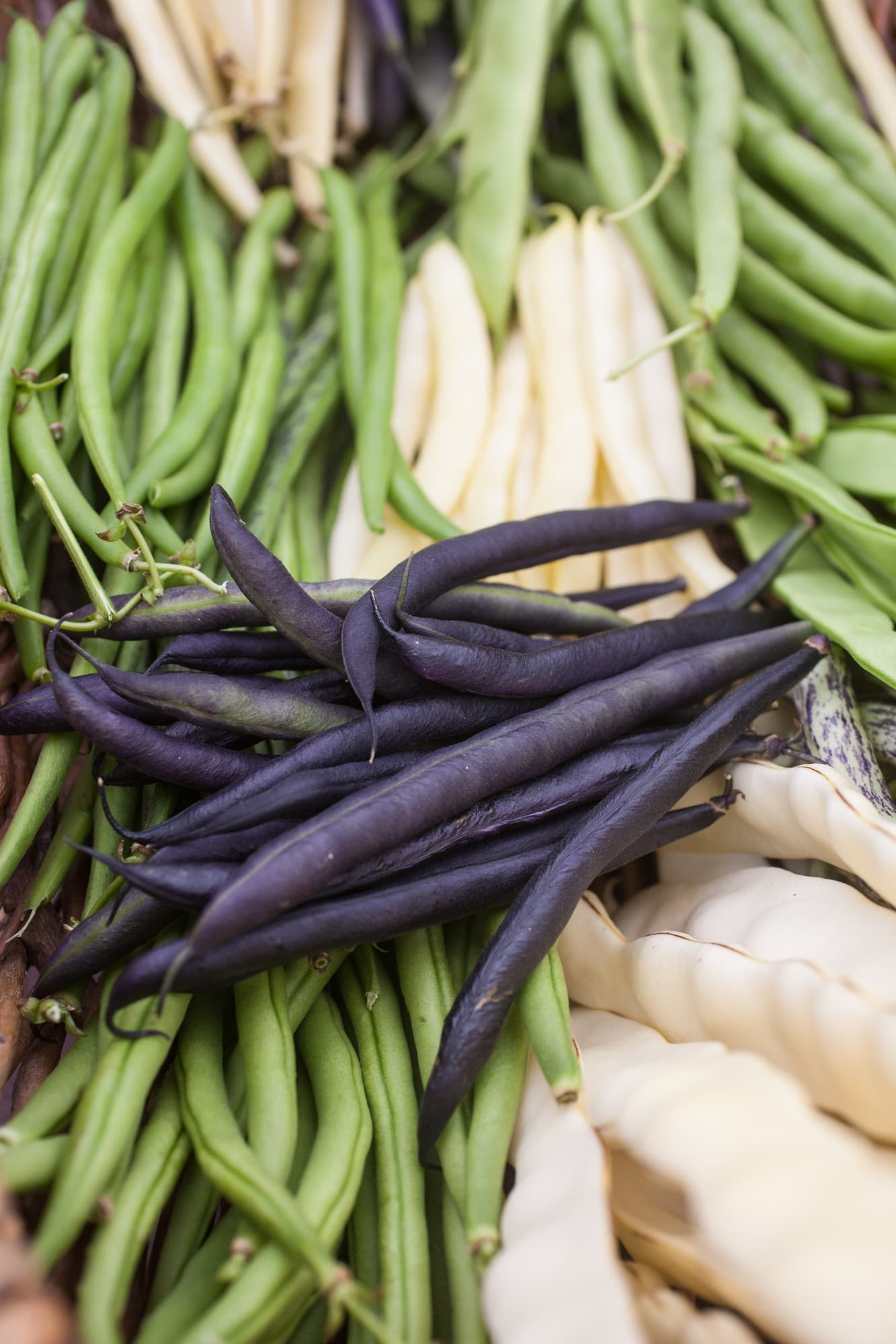 Different snap beans that are lovely for a summer lunch.