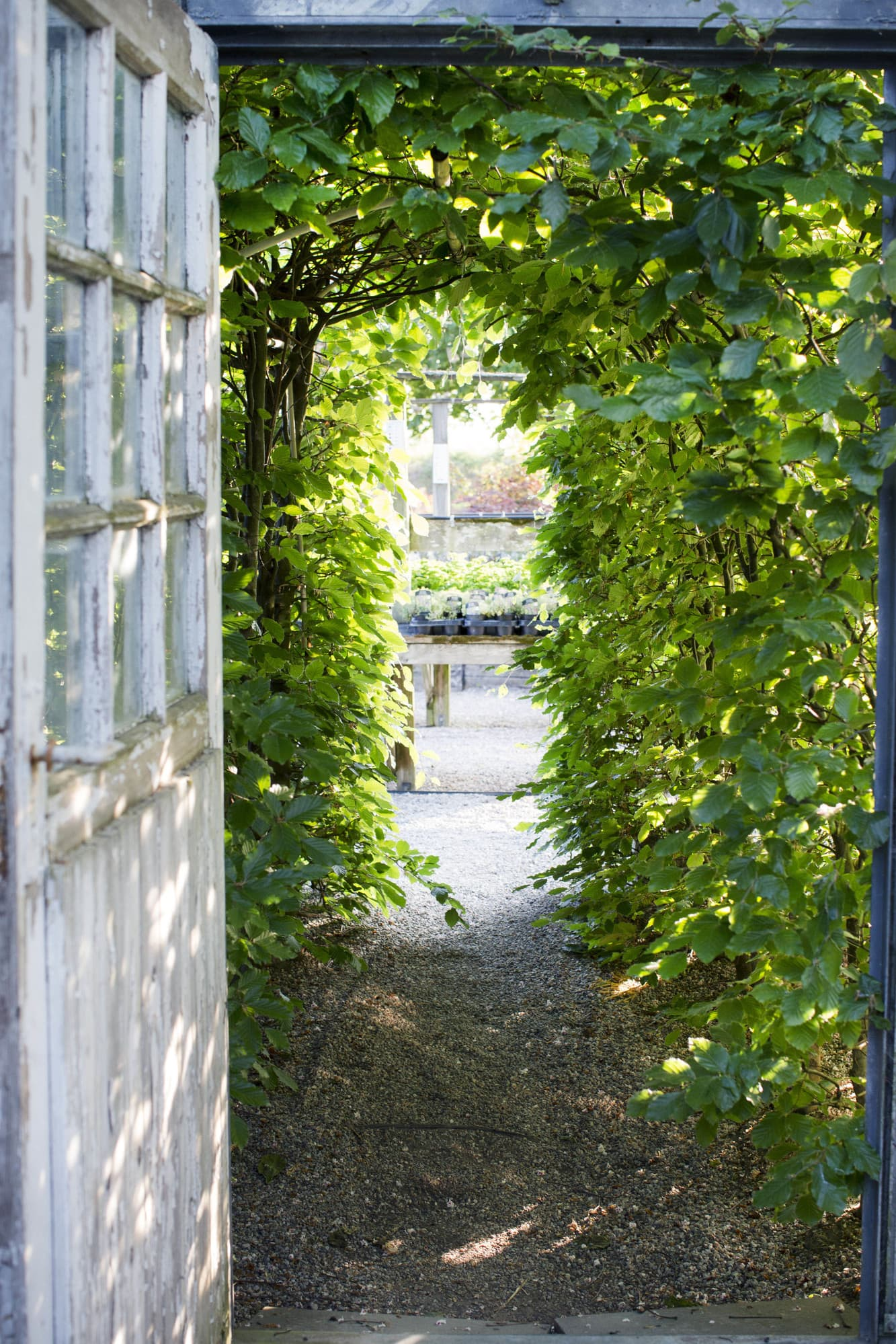 A door leads into Löddeköpinge Nursery, which Heidi started almost forty years ago.