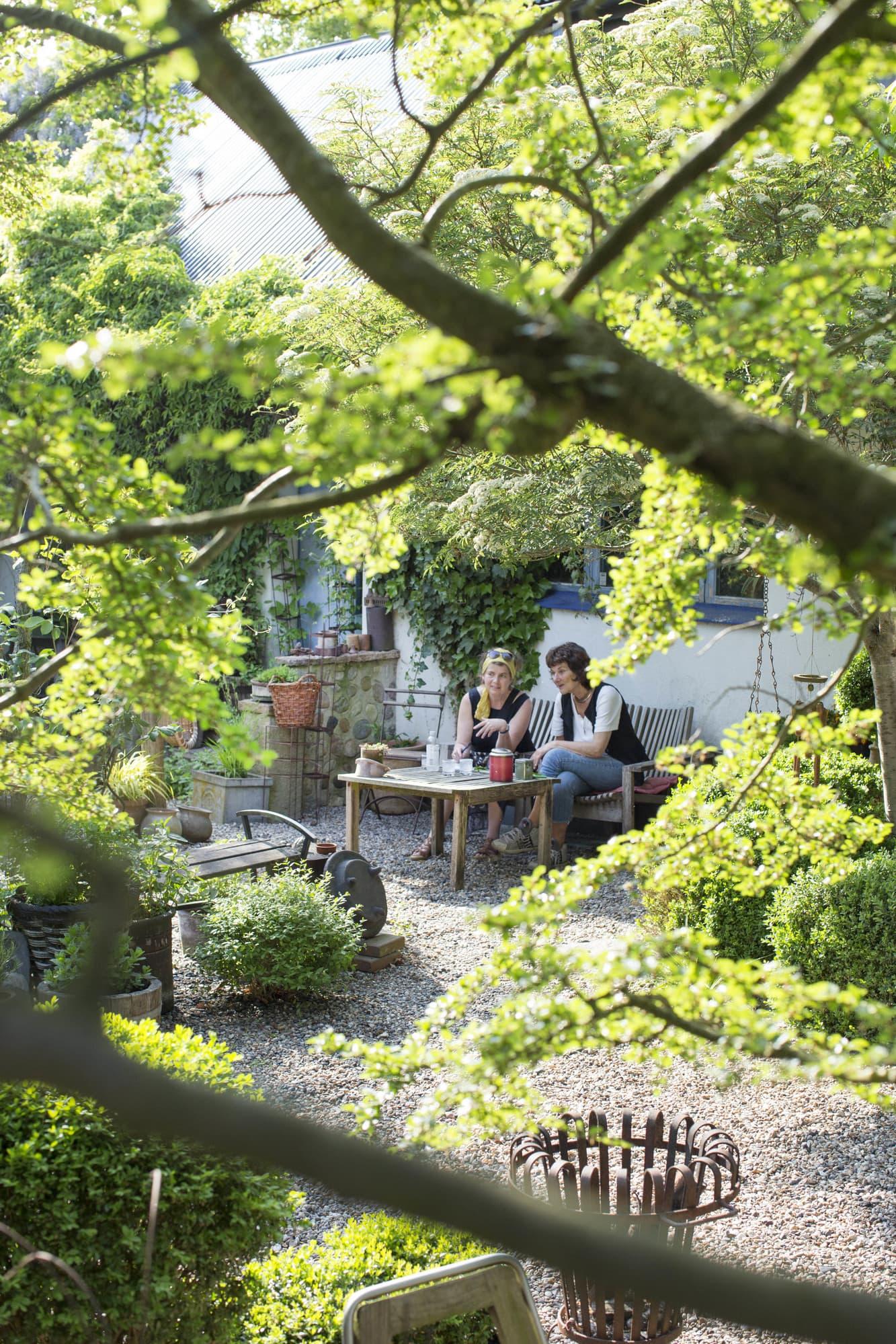 Heidis trädgård är egentligen en grusad gårdsplan, men en grönskande sådan! Här sitter man omgiven av klätterväxter, träd och buskar som effektivt klär in både väggar och tak.