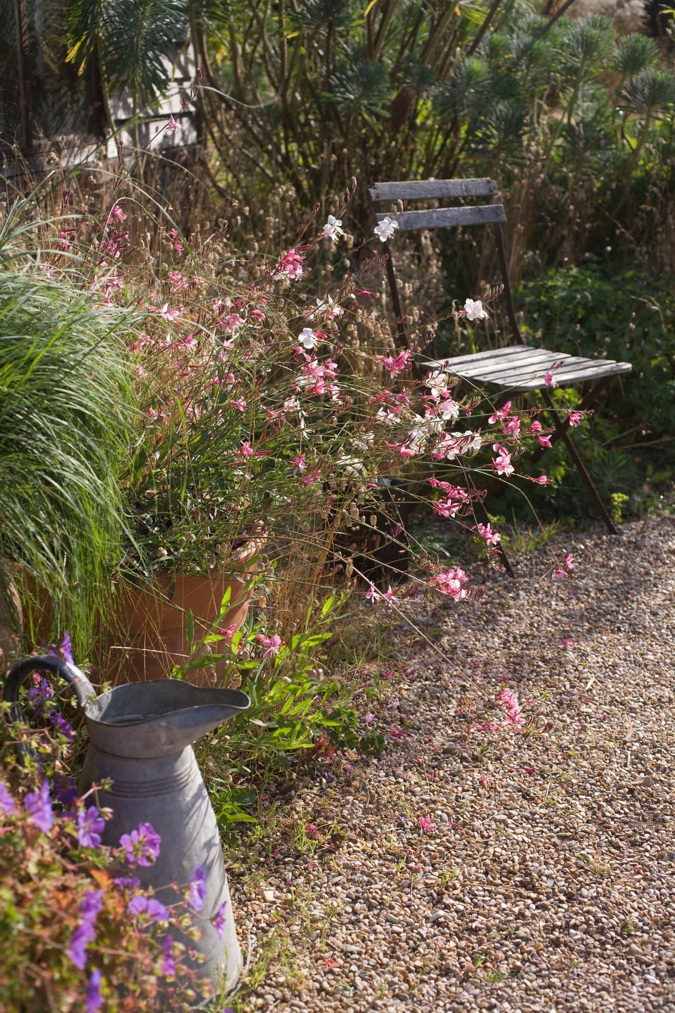 Sommarljus med sina små fjärilsliknande blommor i rosa och vitt, gör sig bra i motljus.