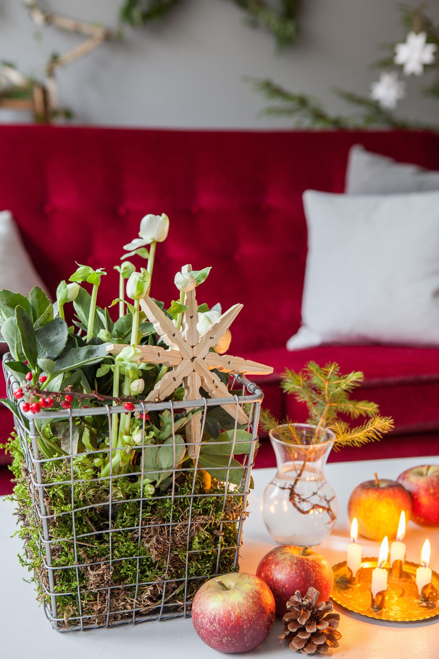 Blommig grupp - gör en dekorativ blomgrupp av trådkorg, mossa, julros och några dekorationer. Vi har först fyllt botten med mossa, sedan ställt i julrosen i sin plastkruka och fyllt på med mossa runt om. Använd gärna en kvist med vinterröda bär och en snöflinga av klädnypor.