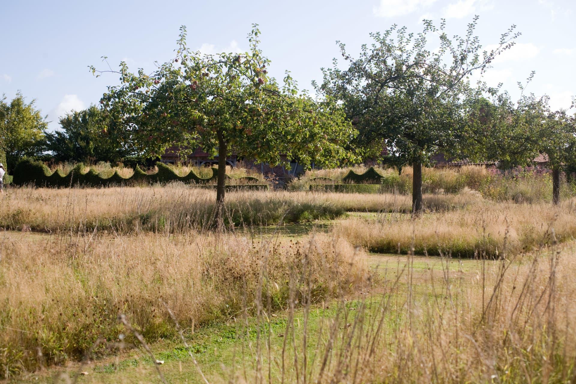 Äppleträden är planterade i strikta rader.