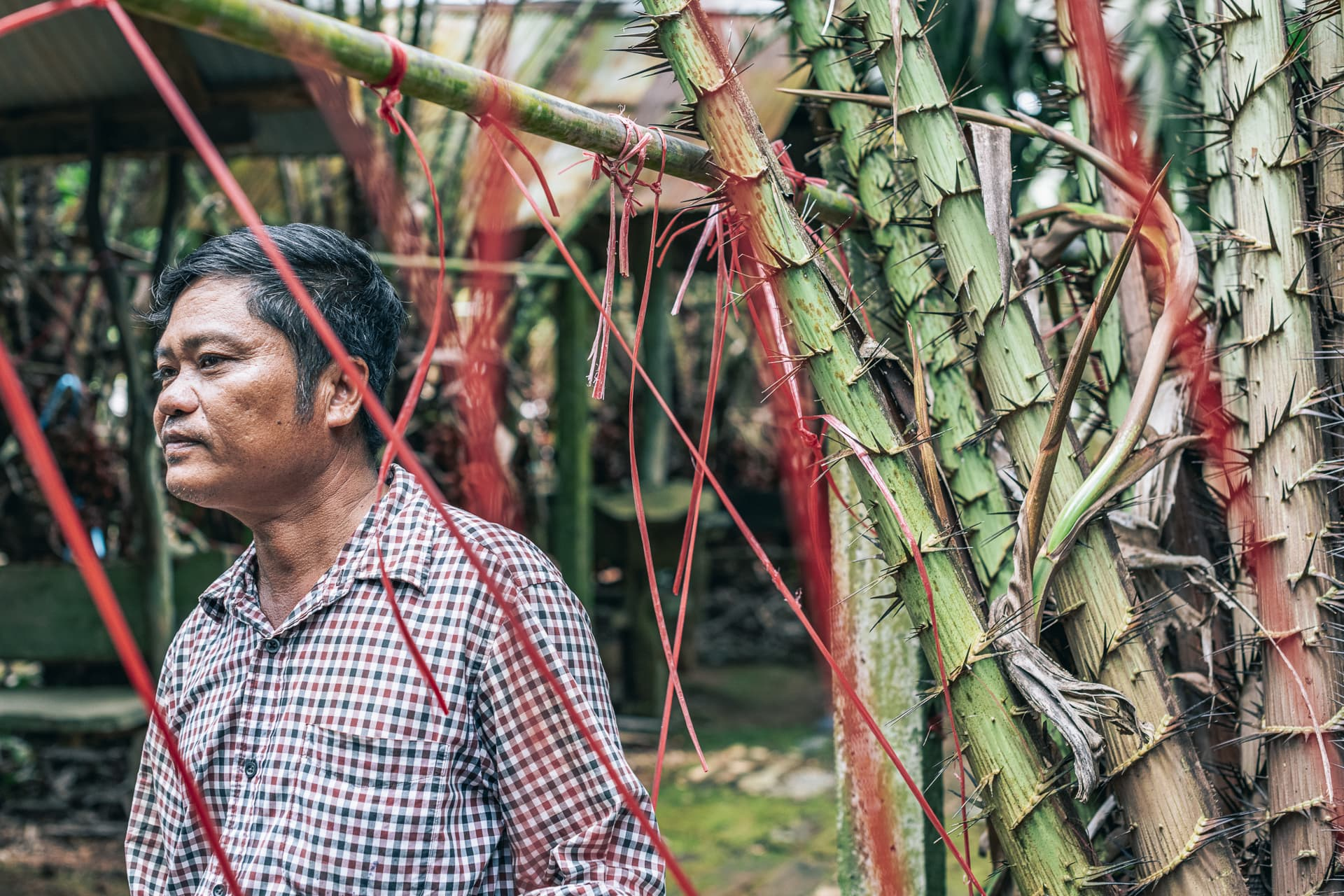 Salak farmer at Suan Lung Pichai, in the Rayong province.