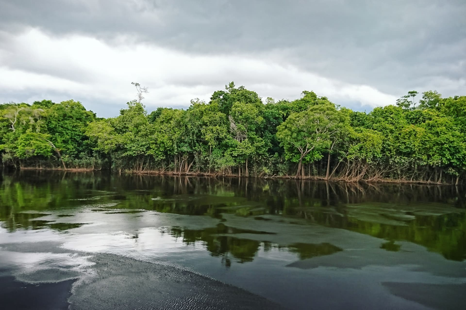 The Rio Negro river and its surroundings, in the Brazilian Amazon, are a great source of inspiration for Elin.