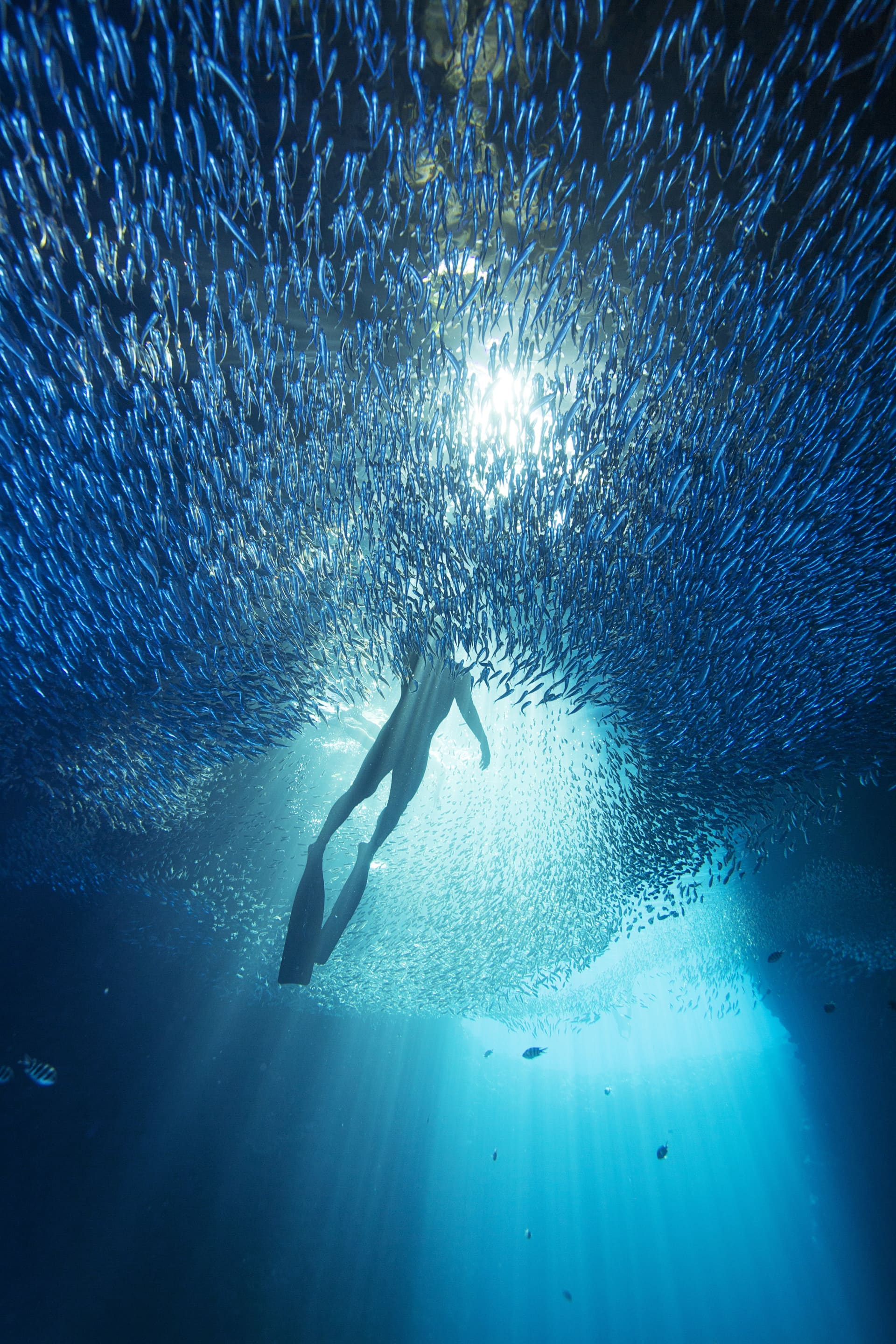 These shots are from a cave called Swallows, I swam using scuba equipment and my whale spotter and swim partner Falanisi Tongiis in the pictures freediving.