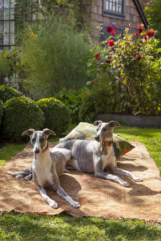 Freddy and Bertie enjoying the garden.