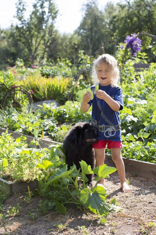 Viggo med Newfoundland-hunden Kapten Kuling hittar enkelt ätbart jämte trädgårdsgångarna.