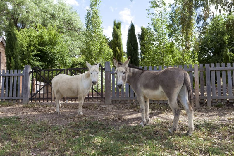 Kiki and Doudou in their paddock at the bottom of the garden.