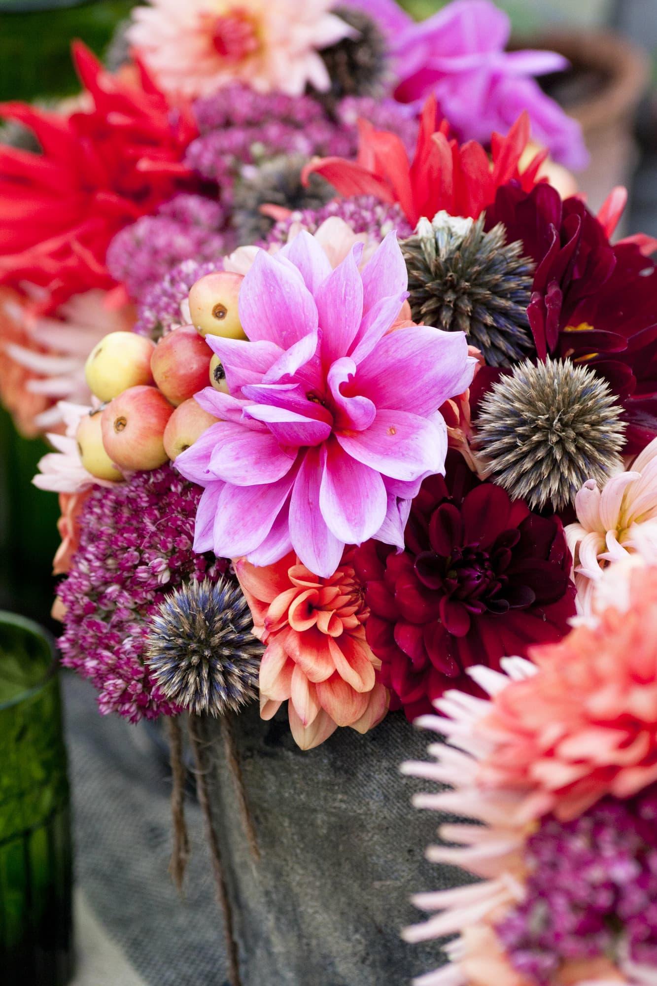 Slösa när du plockar de sista blommorna i trädgården: dahlior, kärleksört och bolltistelns fröställningar är vackra tillsammans.