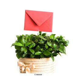 Miniatúrne obálky