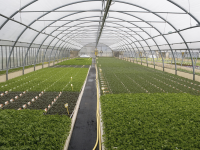 ​New Age Farm (NF: CNX) adds 24,000 square feet to Washington Greenhouse