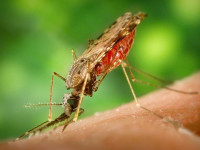 Agenus (AGEN) Spikes on Results from Malaria Vaccine Trial