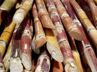 Sugar Prices To Remain Lower On Weaker Demand, And Currencies