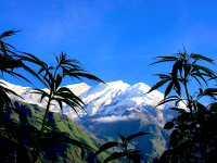 ​5 Cannabis Companies We're Thankful For on National Weed Appreciation Day