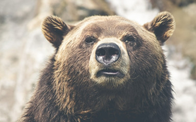​Dividend Stocks: No Match For Market Bears