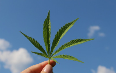 ​Will Cannabis be Federally Legal by 4/20 Next Year?