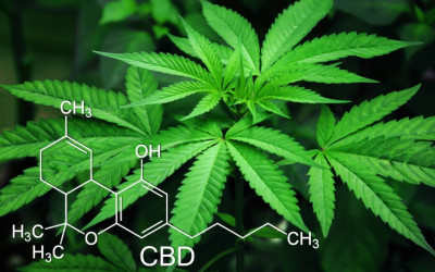 ​What Are Top Medical Research Companies Discovering about Cannabis?