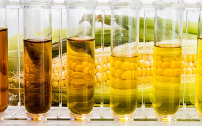 Is Ethanol Worth the Fight?