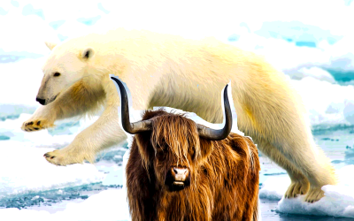 The Danger of Being Bearish in a Bull Market