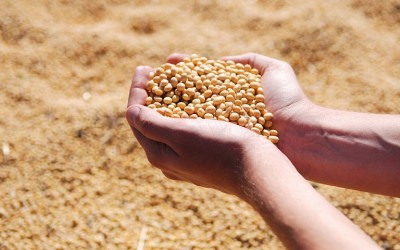 ​Soybean Rally is Classic Summer Sell Signal
