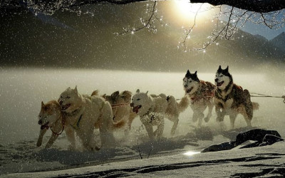 ​Can Just a Few Dogs Keep Pulling the Stock Market Sled?