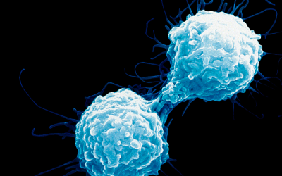 Alpine Immune Sciences Shows Positive Preclinical Data for Cancer Immunotherapy