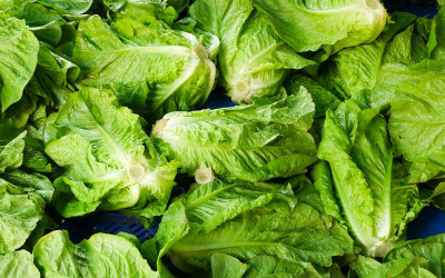 CDC Warns the Nation to Avoid All Romaine Lettuce